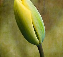 Shades of Spring by KBritt