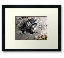 Fishing Is Hard Work, Great Blue Heron in Action Framed Print