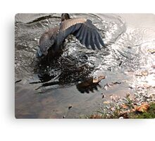 Fishing Is Hard Work, Great Blue Heron in Action Canvas Print