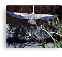 Great Blue Heron Taking Off - Beauty In Motion Canvas Print