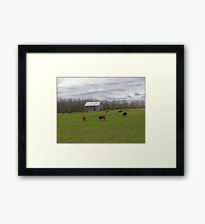 A Day on the Farm Framed Print