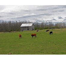 A Day on the Farm Photographic Print