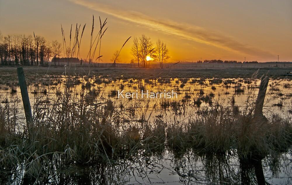 Alberta Sunset by Keri Harrish