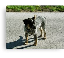 Fearless Amish Dog Hanging Out in the Road Canvas Print