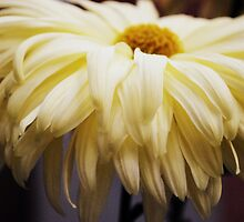 Soft Yellow Chrysanthemum by Lozzar Flowers & Art