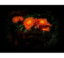 Orange ground cover - in my garden Photographic Print