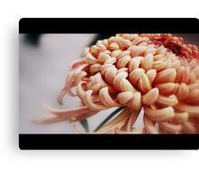 Film the Chrysanthemum Canvas Print