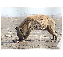 Spotted Hyena with Prey Poster