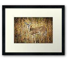 Natural Beauty Framed Print
