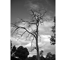 Dark Branch Photographic Print