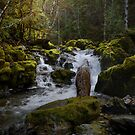 What A Rush by Charles & Patricia   Harkins ~ Picture Oregon