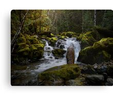 What A Rush Canvas Print