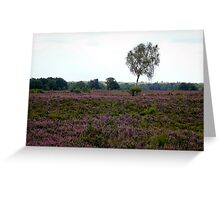 Lonely highness in heathland Greeting Card