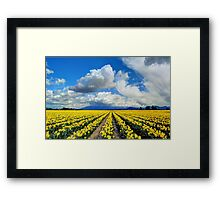 Blanket of Sunshine - Daffodil Fields 1 Framed Print