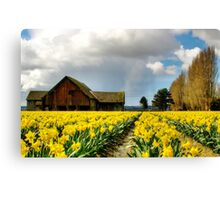 The Old Barn - Daffodil Fields 2 Canvas Print