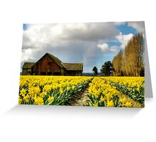 The Old Barn - Daffodil Fields 2 Greeting Card
