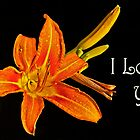 Greeting card - Daylily - Love You by cclaude