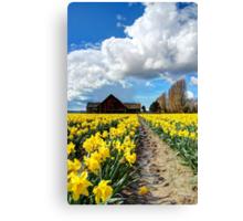 Daffodil Fields 5 Canvas Print