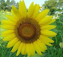 Sun Flower by smartartsco