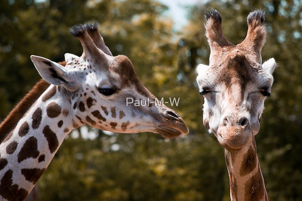 Secret Giraffe by Paul-M-W