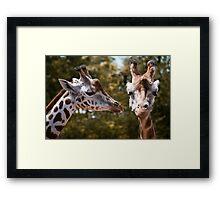 Secret Giraffe Framed Print