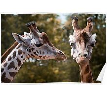 Secret Giraffe Poster