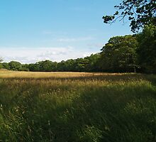 Meadow by WatscapePhoto