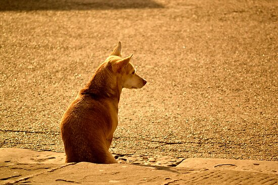 il Cane by ameeks22
