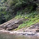 """The Chestatee River 02"" by mls0606"
