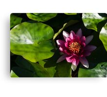 Vivid Magenta Lotus Bloom Canvas Print