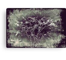 Surrealistic Tree Canvas Print