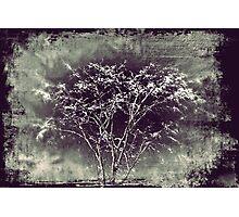 Surrealistic Tree Photographic Print