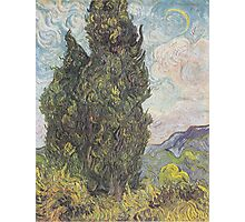 Cypresses by Vincent van Gogh Photographic Print