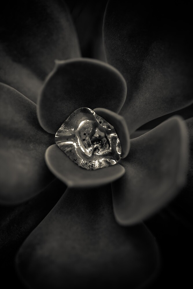 Mercury by alan shapiro