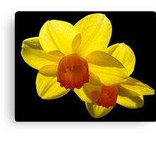 Floating Daffodils. Canvas Print