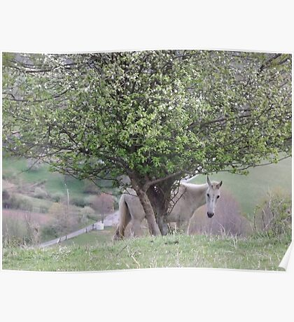 White Horse & the Apple Tree Poster