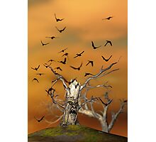 Pesky Birds Photographic Print