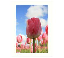 Tulips and the Sky Art Print
