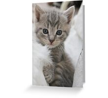 blue eyed fluff Greeting Card