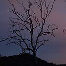ONE TREE by Colin Van Der Heide