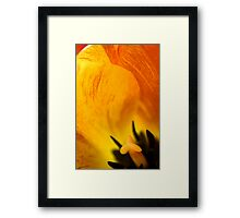 Yellow-belly Framed Print