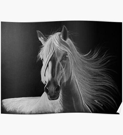 """""""A White Beauty"""" - Lusitano stallion Poster"""