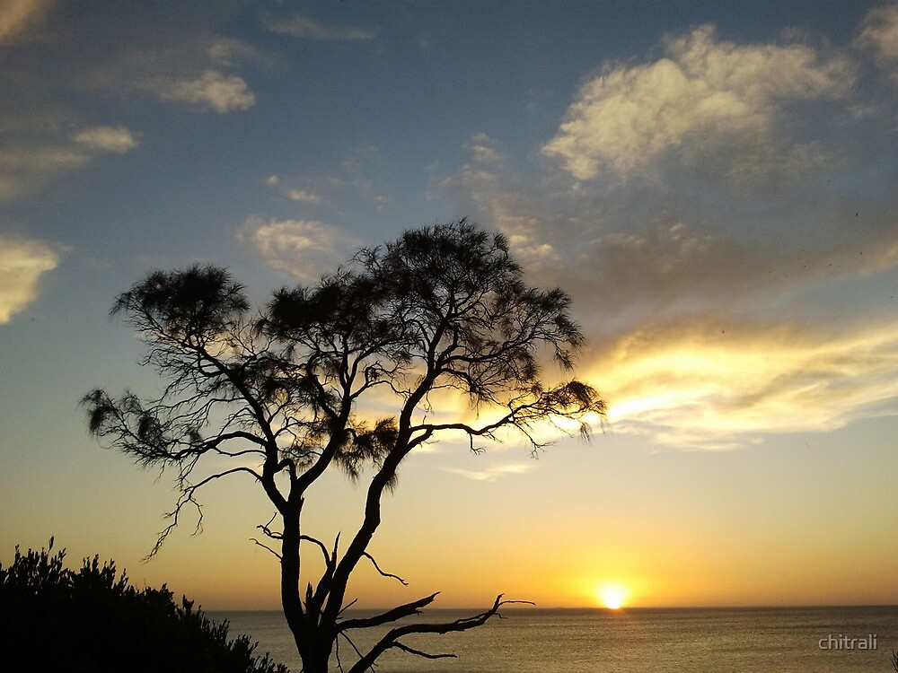 A Lone Tree, A Lone Sunset - a short story by chitrali