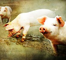 3 little pigs messing in lovely mud by hartpix