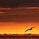 Sunset Flight by Lynnette Peizer