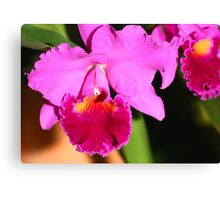Orchid in Magenta Canvas Print