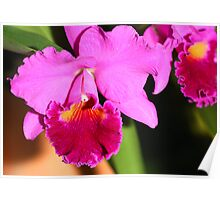 Orchid in Magenta Poster