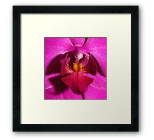 Moth's Eye View Framed Print