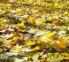 Selective focus on the yellow fallen autumn maple leaves by vladromensky