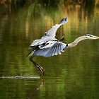 Landing Gear Down  by Saija  Lehtonen